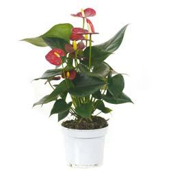 Voici la sélection de fleur et plante exotique pour vous \u003c\u003c\u003c\u003c. Plante verte  avec fleur rouge
