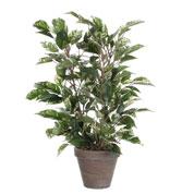 Plantes vertes et exotiques artificielles vente en ligne for Vente plante verte en ligne