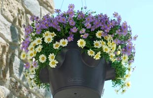 Hanging basket Cascadino Color