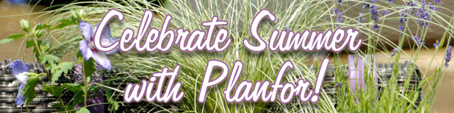 Celebrate Summer with Planfor!