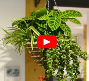 Floreira de Inverno 'Indoor Jungle'