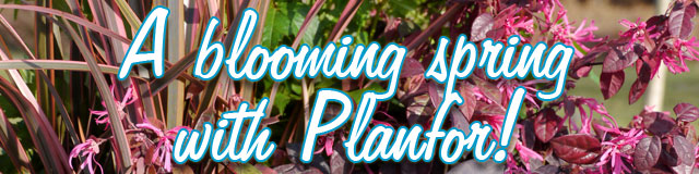 A blooming spring with Planfor!