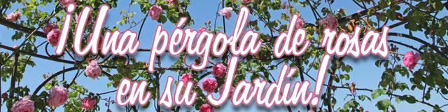 una pérgola de rosas en su jardín!