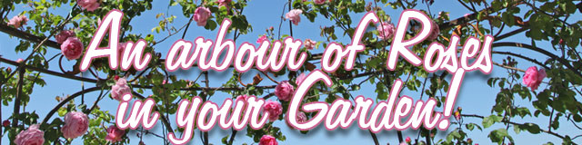 An arbour of Roses in your garden!