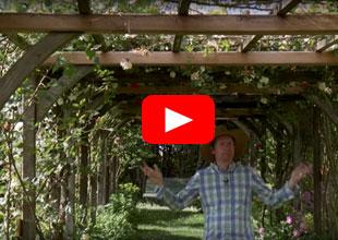Vidéo inspiration jardin Tunnel de roses