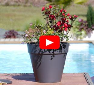 Jardinera de primavera 'Spring Martinii'