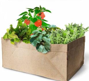 Kit Mini-Jardin Huerto Bio