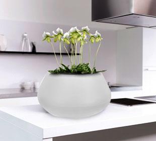 Pure Cone Bowl - White