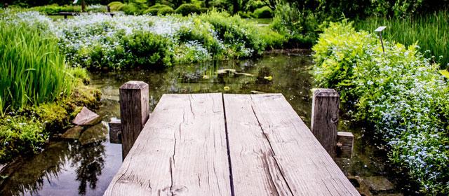 Special Ponds