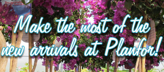 Make the most of the new arrivals at Planfor!