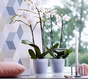 Pot pour orchidées Transparent