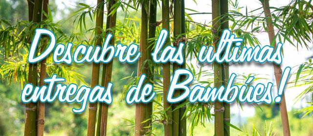 Descubre las ultimas entregas de Bambúes!