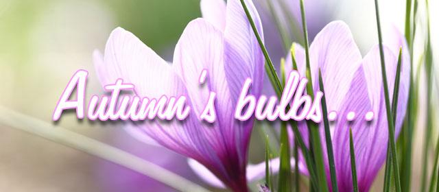 Autumn's bulbs
