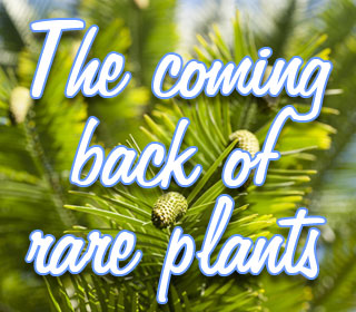 The coming back of rare plants