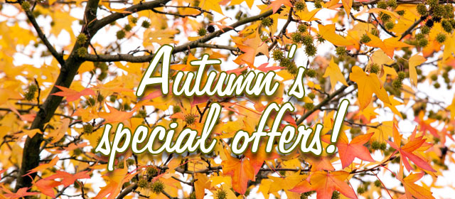 Autumn's special offers !