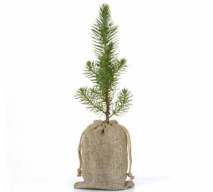 Corporate Tree Gifts