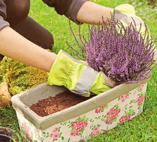 Plantes pour jardinières d'hiver