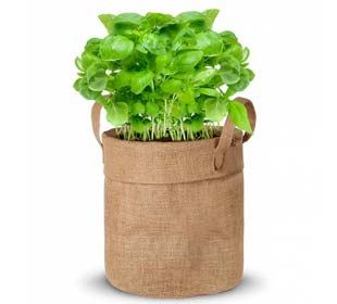 Growing kit - Basil