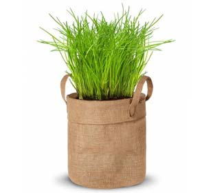 Growing kit - Chives