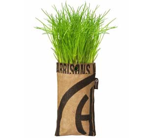 Hanging Growing Kit - Chives