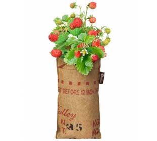 Hanging Growing Kit - Strawberry