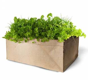 Mini-Aromatic Herbs Garden Bio