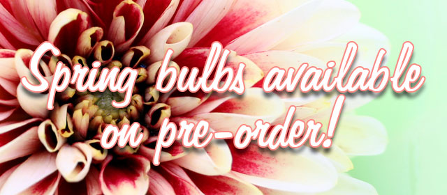 Spring bulbs available on pre-order!