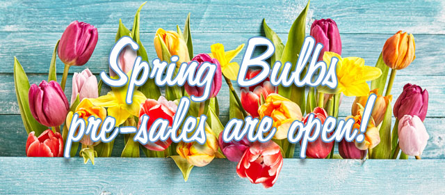 Spring Bulbs: pre-sales are open!