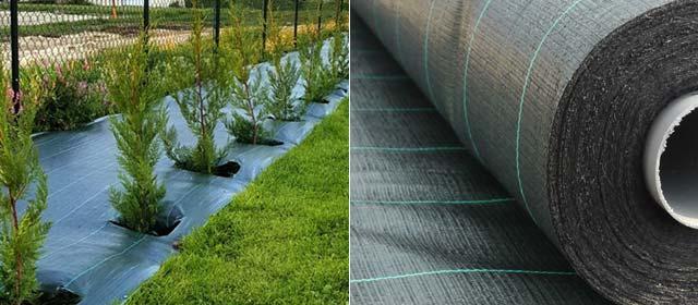 Coberturas agrosolos para plantar sebes