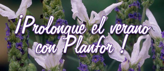 ¡Prolongue el verano con Planfor !
