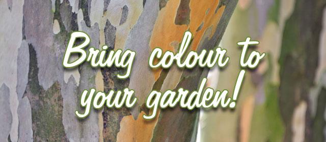 Bring colour to your garden!