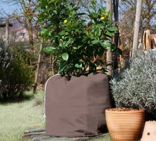 Protection of potted plants Winterpot