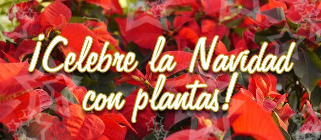 ¡Celebre la Navidad con plantas!