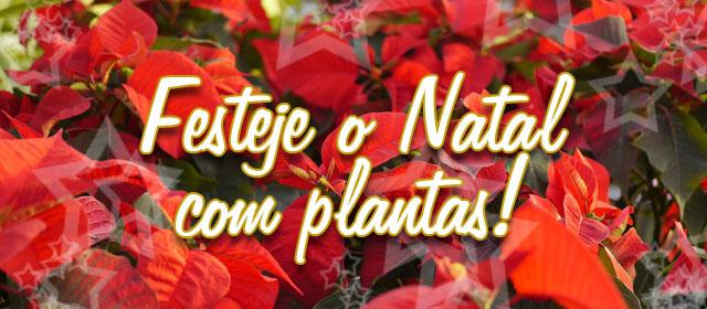 Festeje o Natal com plantas!