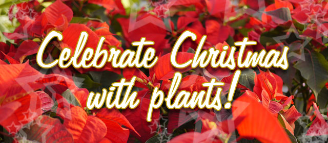 Celebrate Christmas with plants!