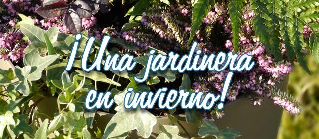 ¡Una jardinera en invierno!