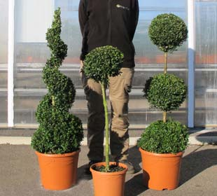 Potted Box Spiral, Potted Box 3 Balls, Potted Box Standard