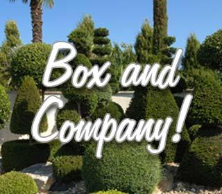 Box and Company!