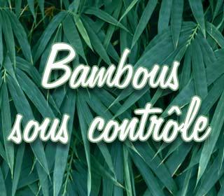 Bambous sous contrôle