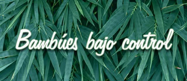 Bambúes bajo control