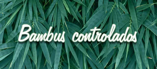 Bambus controlados