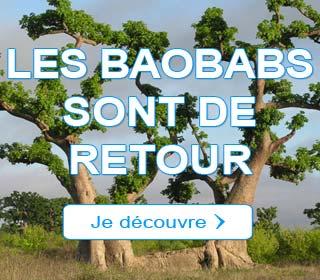 Les Baobabs sont de retour