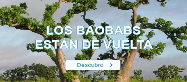 Los Baobabs están de vuelta