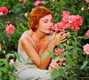 Rosales Perfumados