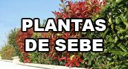 Plantas de Sebe