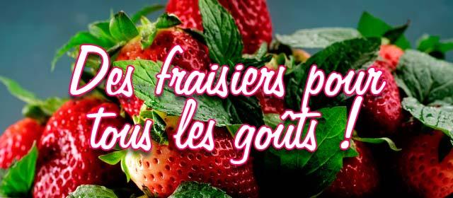 Des fraisiers pour tous les goûts !