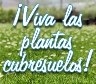 ¡Viva las plantas cubresuelos!