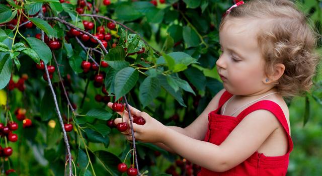 Top 5 de frutales fáciles