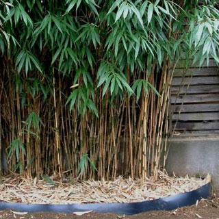 Barreira contra os rizomas